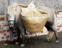 Patient pony.