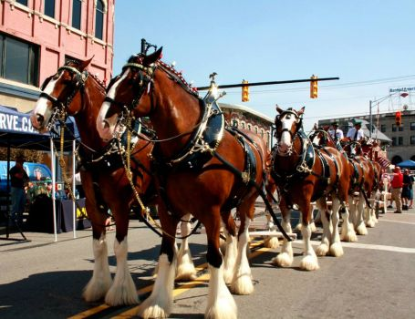 Clydsdales 2
