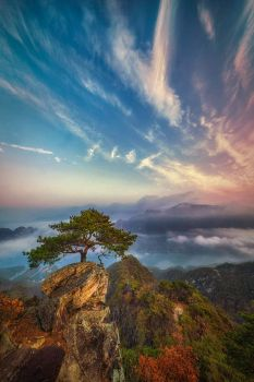 A tree on top of a mountain in Korea  4815