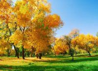 3-yellow-trees
