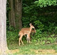 Bambi Twins