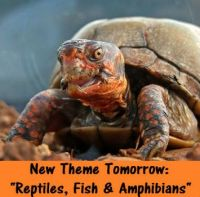 "New Themes Tomorrow: ""Fish, Amphibians & Reptiles""  Have Fun"
