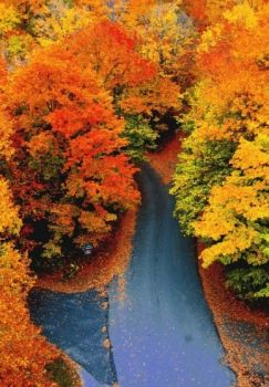 Autumn Road, Woodstock, Vermont