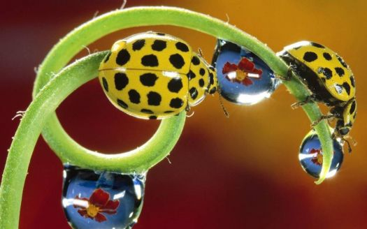 yello lady birds