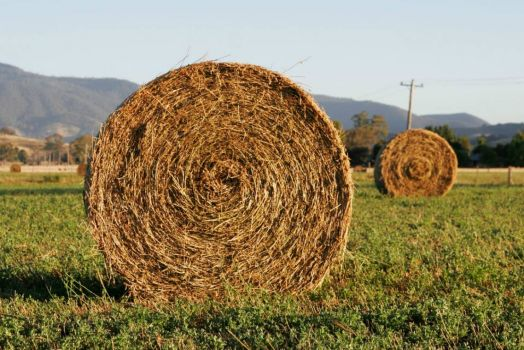 Theme: Round Things - Round Hay Bales
