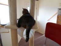 Thomas on HIS cat tree in HIS sewing room :)
