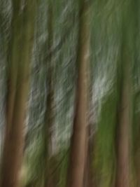 Trees--abstract intentional camera movement #4
