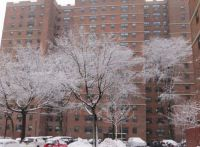 snow-covered trees in our parking lot