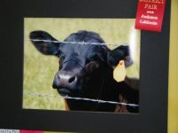 meggie's red ribbon in animal category at county fair...judged today