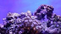 Wakiki Aquarium
