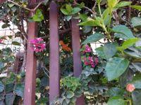 flowers thru the fence