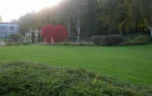 tuin herfst