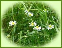 Bloemen in het veld.