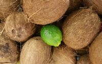 Lime in the Coconut (smallest of 3 sizes selections)