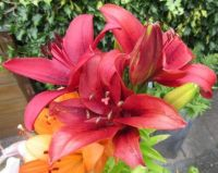 Red Lilies for our friend Faye (gemstone) for her BIRTHDAY!!♥