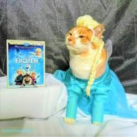 Cat Icon Game #36 - please identify!
