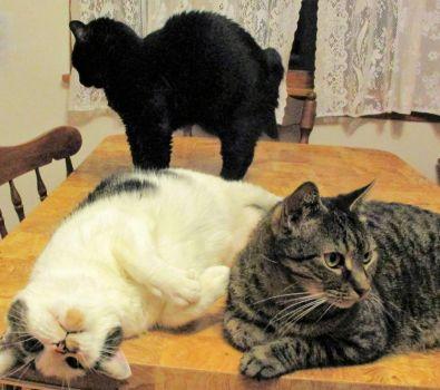 Igor, Nessie, and Shadow