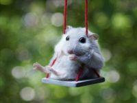 Mousie swinging
