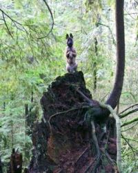 Squirrel chasing disguise