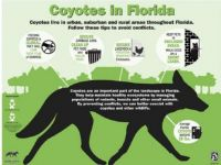 COYOTES in Florida  Info