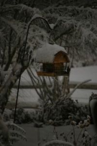 Birdfeeder in the Snow