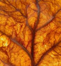 4.  ~ 'Nerves of a Fall(en) Leaf'