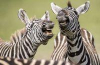 Funny Animals  ~  Best Joke I've Heard in a Long Time