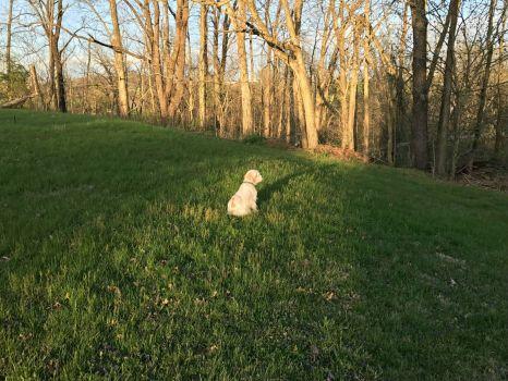 Rocky guarding-2017-3790x2842