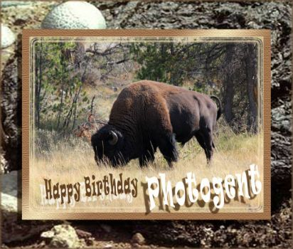 The herd is here to say Happy Birthday to Photogent.