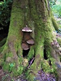 Mossy tree & fungi