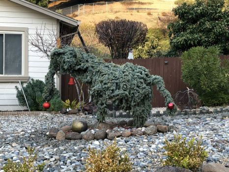 Seasonal Woolly Mammoth