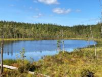 Small tarn in the forest