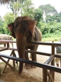 Elephant Hills, Thailand.