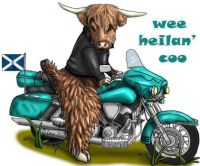 Wee Celtic Coo