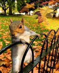 ..fall squriel on fence
