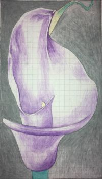 calla lily drawing 1