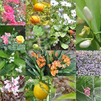 Spring in So-Cal
