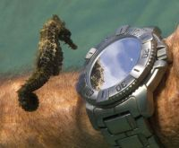 seahorse-checking-out-divers-watch-and-own-reflection-underwater