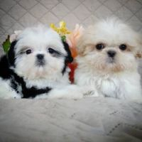 Candy and her brother