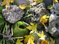 Rocks And Autumn Leaves  1