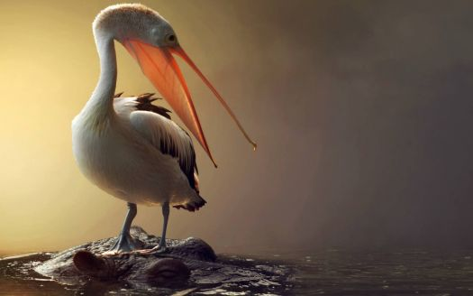 Pelikán vizilovon