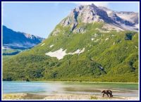 s-1 Alaska-Landscape-with-Bear-katmai-national-park