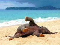 elephant at the beach