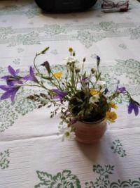 kytička z vycházky