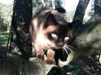 Mya in a tree