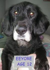 Eeyore (RIP)