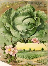 Themes Vintage ads - Maule's seed catalogue : 1894