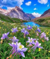 Columbines at the blue lake