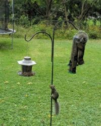 Bird Feeder Shenanigans
