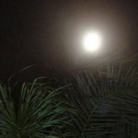 LakeWorth Full Moon and Palm Tree